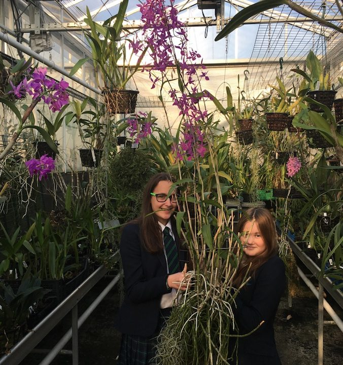 Christmas celebration of Orchid Project's inclusion in global conservation initiative